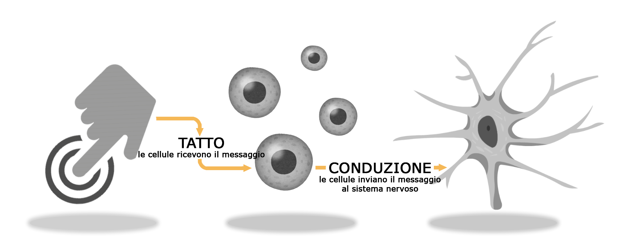 sistema nervoso icona
